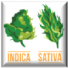 Indica, Sativa or Mixed